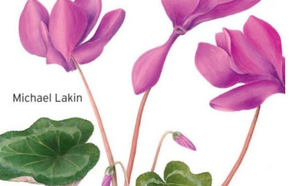 Beginners Guide to Botanical Flower Painting